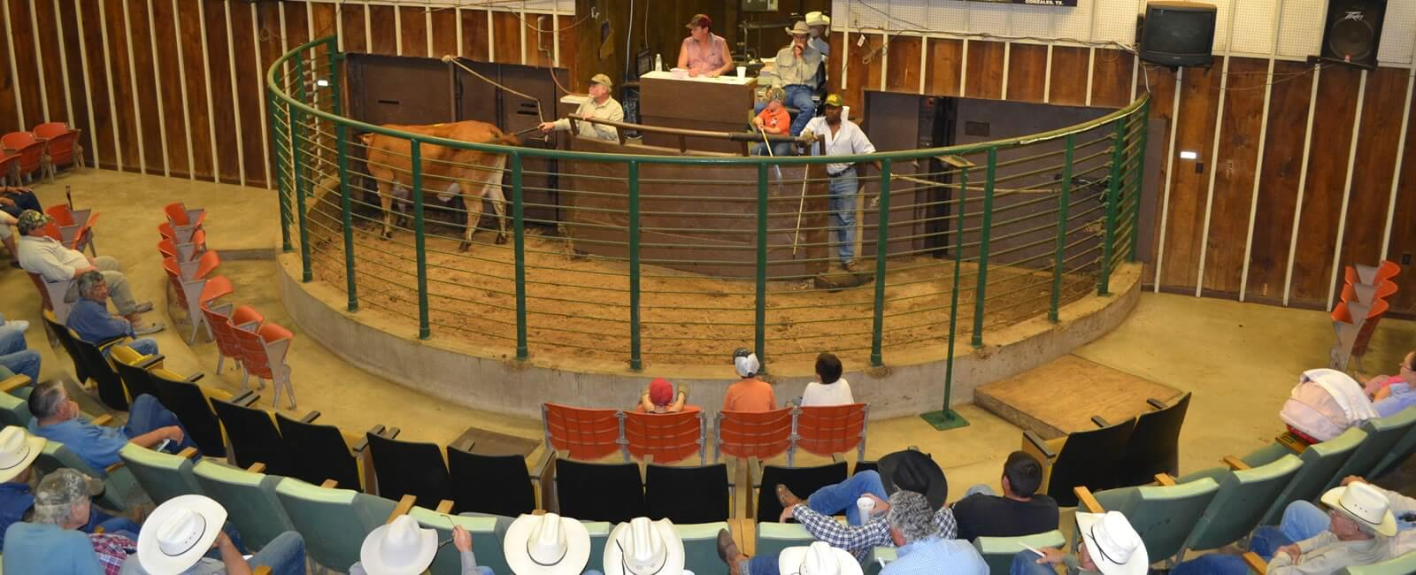 Gonzales Livestock Market, Inc  | Cow Calf Cattle Auction